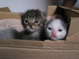 Kediler Yeni Doğmuş Yavrularını Yer Mi?