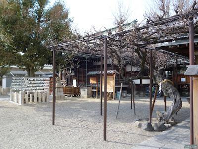 東成区の八阪神社御神木