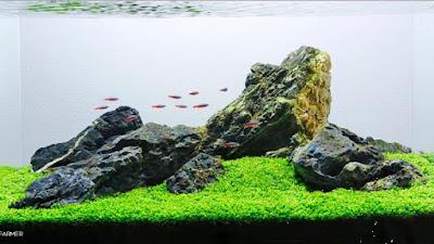 Gambar Aquascape Iwagumi