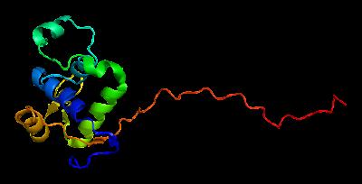 Il gene WRN