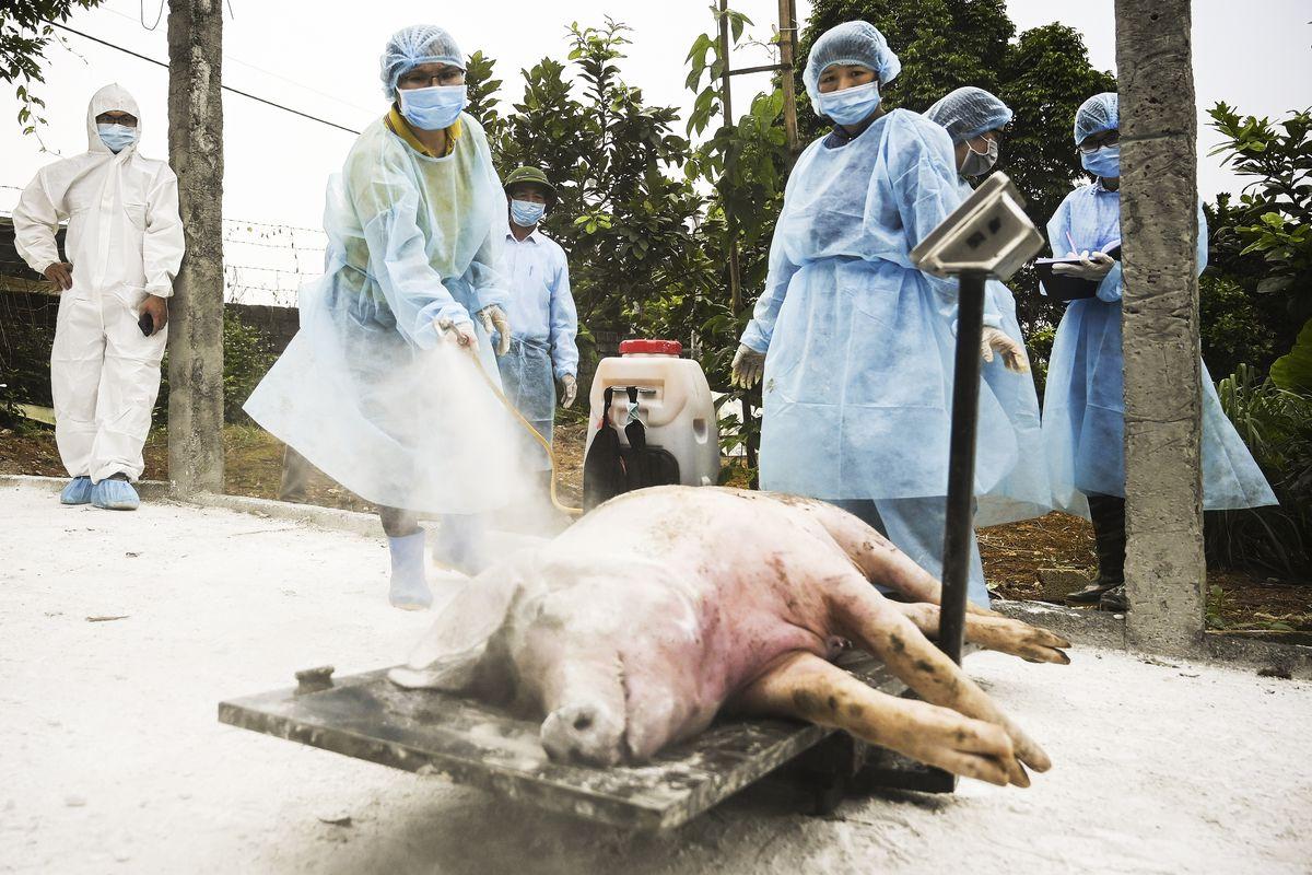 New Swine Flu