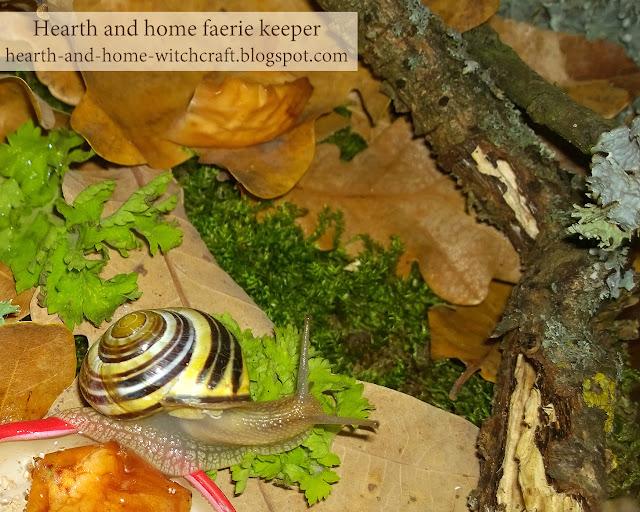 дом, зима, природа, фауна, флора, фотография, весна, описания природы, лесные истории, улитка, природа просыпается, цепея, оживление, новая жизнь,