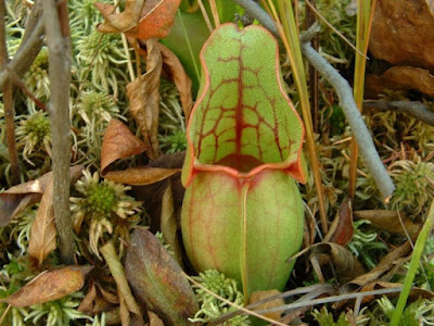 Scientists get inspired by God's creation and make practical applications, but do not give the Creator credit. In this case, a super-slick surfaces was inspired by the pitcher plant.