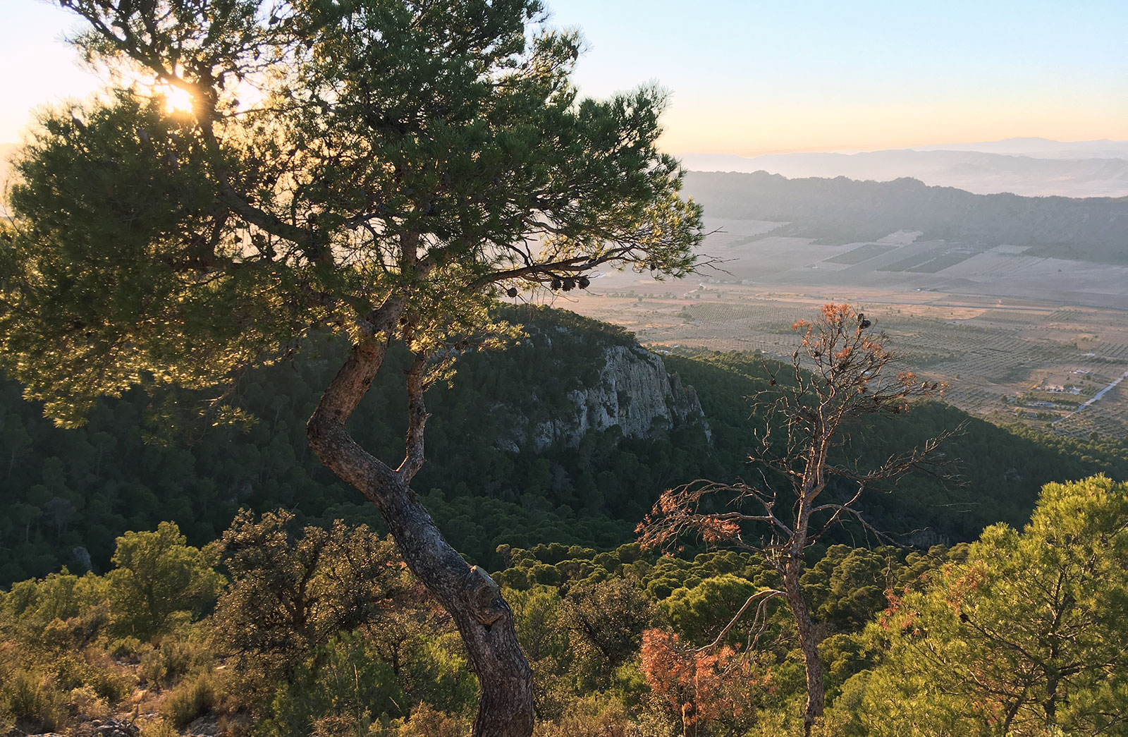 Cortado de las Águilas, Sierra de Salinas, Yecla, 2017