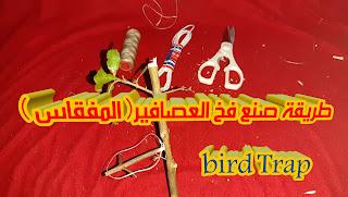 المفقاس Bird trap