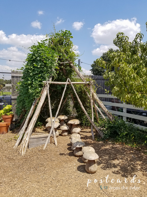 garden vine covered tee pee and concrete mushrooms at magnolia market