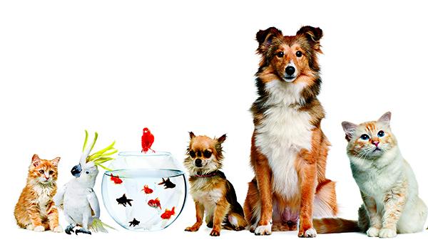 Applications of Mushrooms in Pet Foods