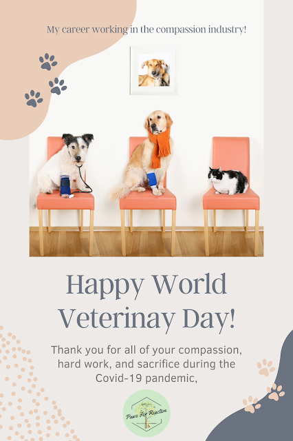 It's World Veterinary Day: Celebrating 6 years in the surprising career of veterinary medicine