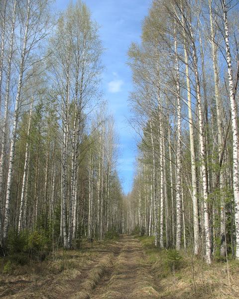 Дорога к Белой деревне