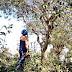 Serviços de podas de árvores são intensificadas em Samambaia