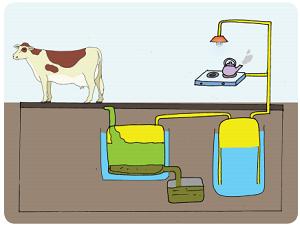 Kompor Biogas Kotoran Sapi Makin Diminati www.simplenews.me