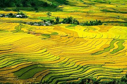 Tujuan Dan Asas Pendaftaran Tanah
