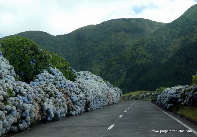 carretera de hortensias en las azores