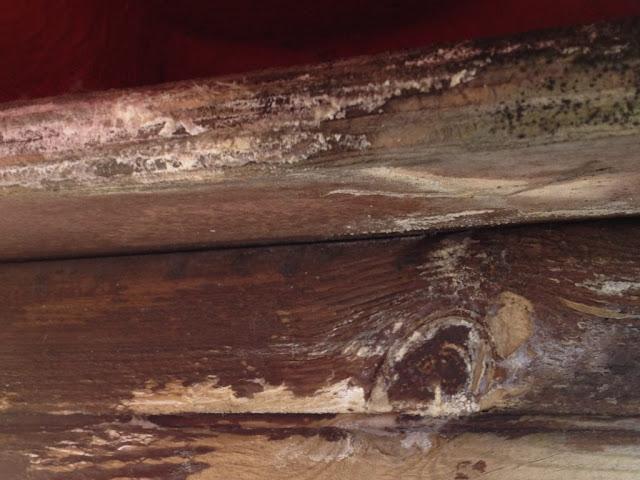 tratamientos madera Zaragoza