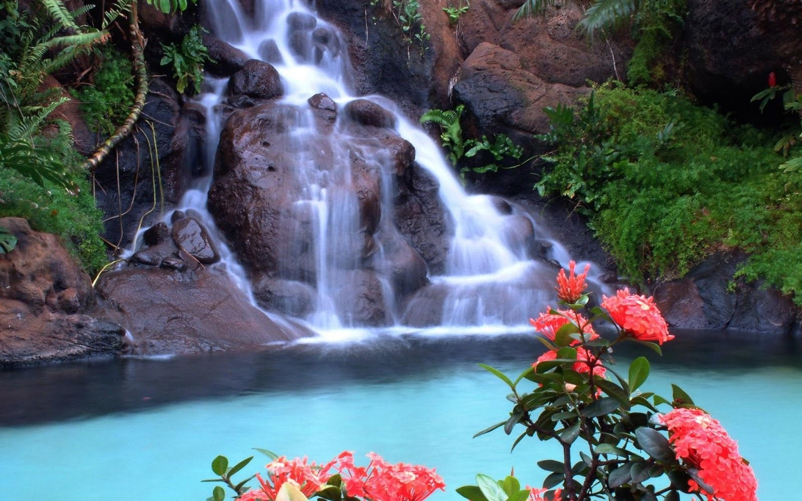 Most Beautiful Waterfalls With Flowers Hd Collection Zone