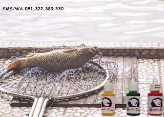 Essen Oplosan Untuk Ikan Mas Subang