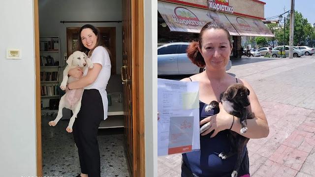 Σκυλάκια από το Ναύπλιο βρήκαν ζεστή αγκαλιά σε Κορυδαλλό και Άγιο Δημήτριο Αττικής
