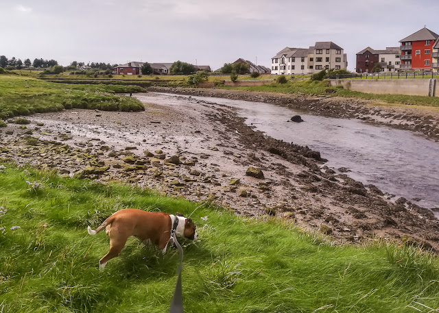 Photo of Ruby by the River Ellen in Maryport