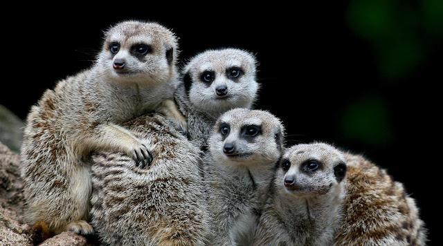 Melbourn Zoo
