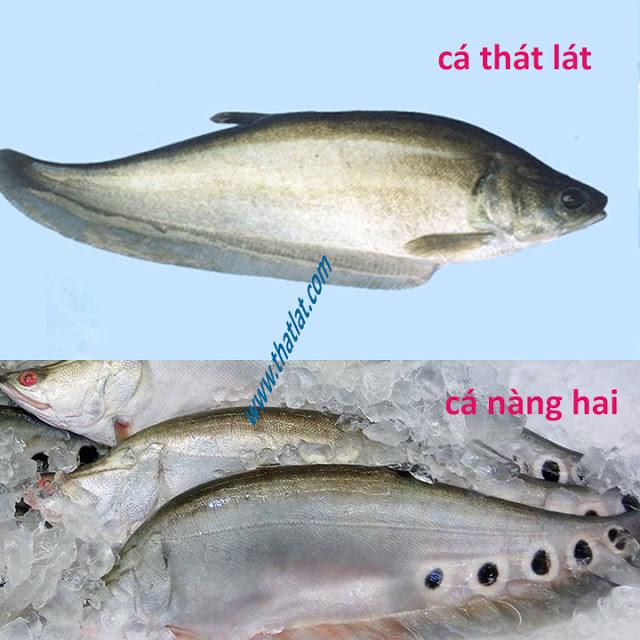 Phân biệt cá thát lát sông và cá nàng 2