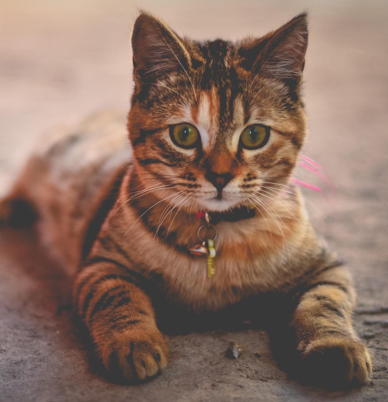 Beautiful Cats dp 2019