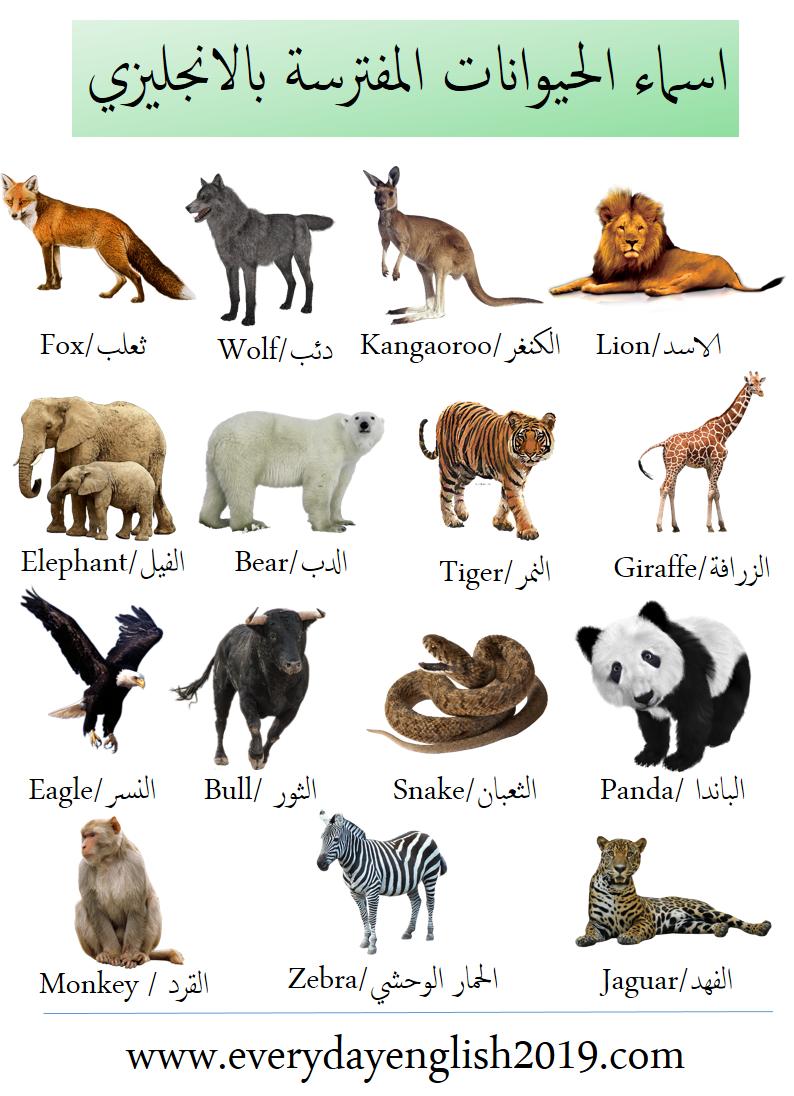 اسماء الحيوانات بالانجليزي -المفترسة-