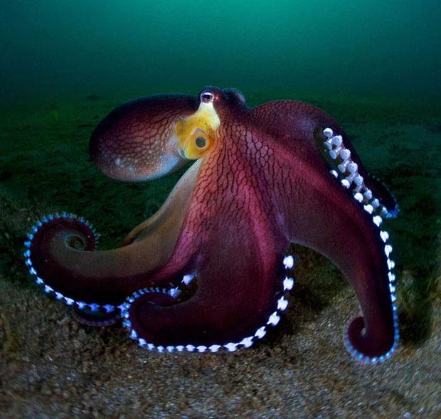 Loạt ảnh đầy ấn tượng về cuộc sống đa màu sắc và cũng không kém phần diệu kỳ dưới đại dương sâu thẳm
