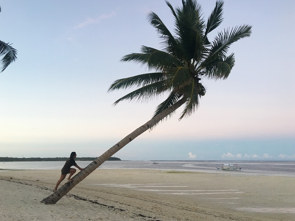 The Famous Coconut Tree in Siargao