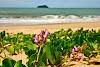 Meio Ambiente: ações de proteção à restinga em Balneário Piçarras