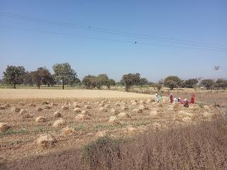 पंजीयन की आखरी तारिक 20 फरवरी, 15 दिनों में गेंहू चने की फसले कटने की स्तिथि में