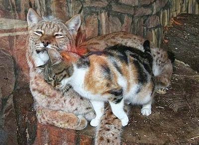 foto tierna de dos felinos