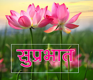 Flower Suprabhat Wallpaper Pics Download