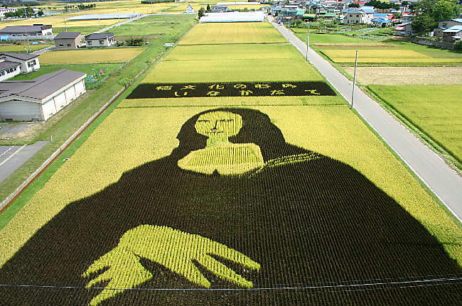 18 Fields That Are Real Works Of Art