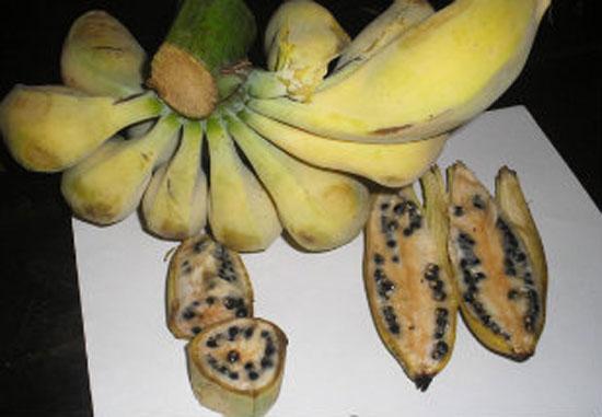 Bananas com sementes