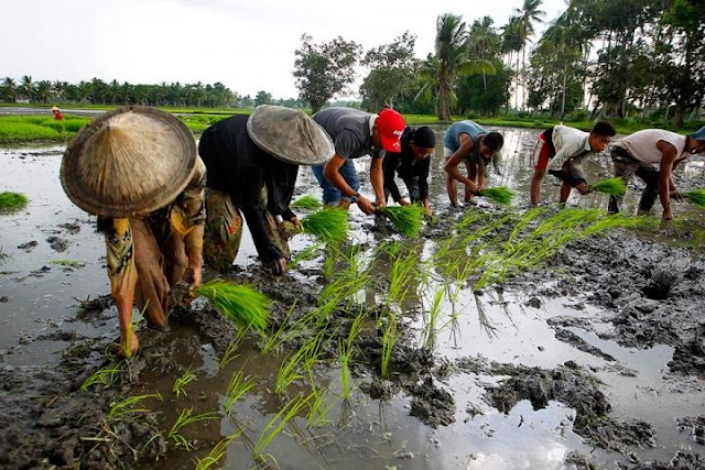 MAGTANIM AY DI BIRO: A very GOOD NEWS for all our Farmers