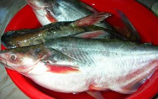 http://habinos.blogspot.co.id/2015/09/ragam-pilihan-umpan-mancing-ikan-patin.html