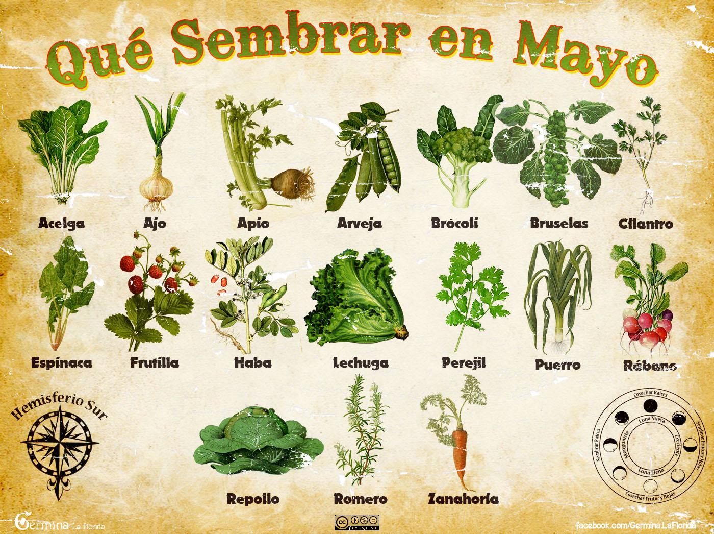 Germina la florida calendario de siembra de mayo - Que plantar en el huerto ...