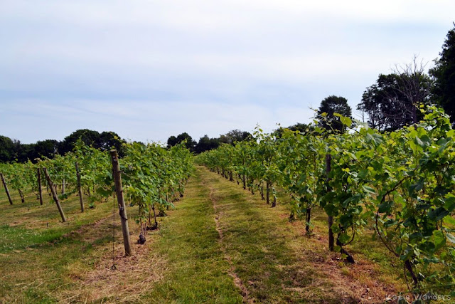 Greenvale Vineyard