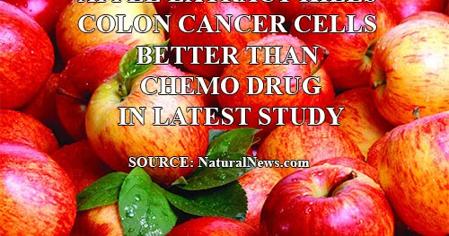 Terapi Kanser Apple Extract Kills Colon Cancer Cells Better Than Chemo Drug In Latest Study