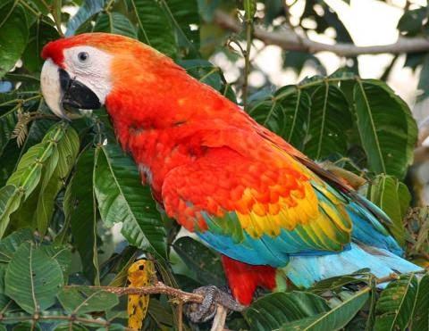 La flora y fauna de la Reserva Nacional de Tambopata en Perú