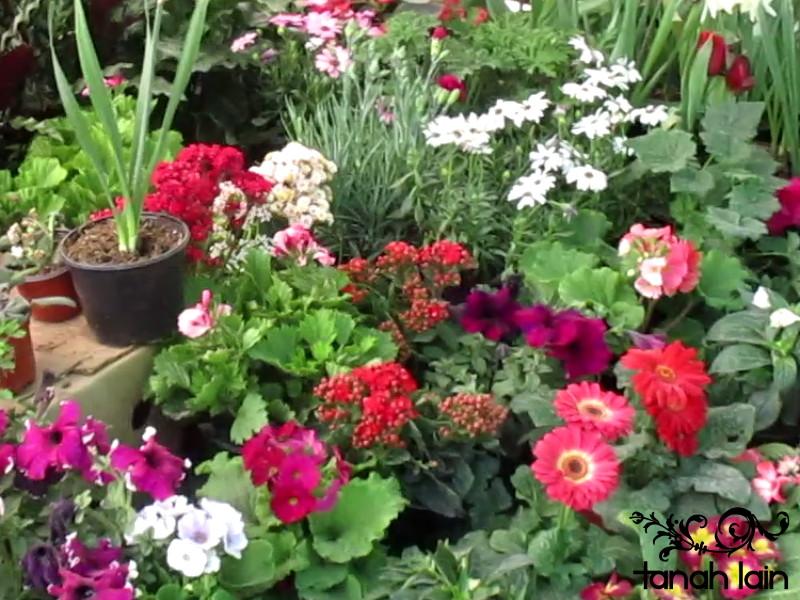 Mis plantas de sol y sombra plantas - Plantas de sol y sombra ...