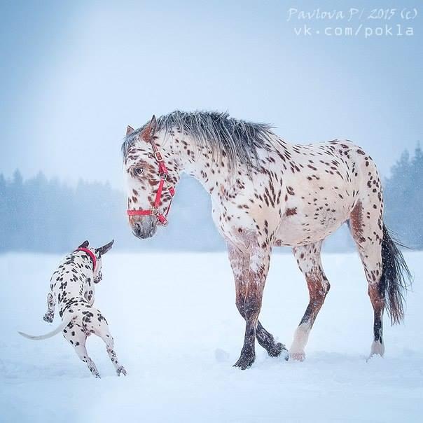Tacchi A Cavallo The 101 Dalmatians A Fancy Spotted Coat