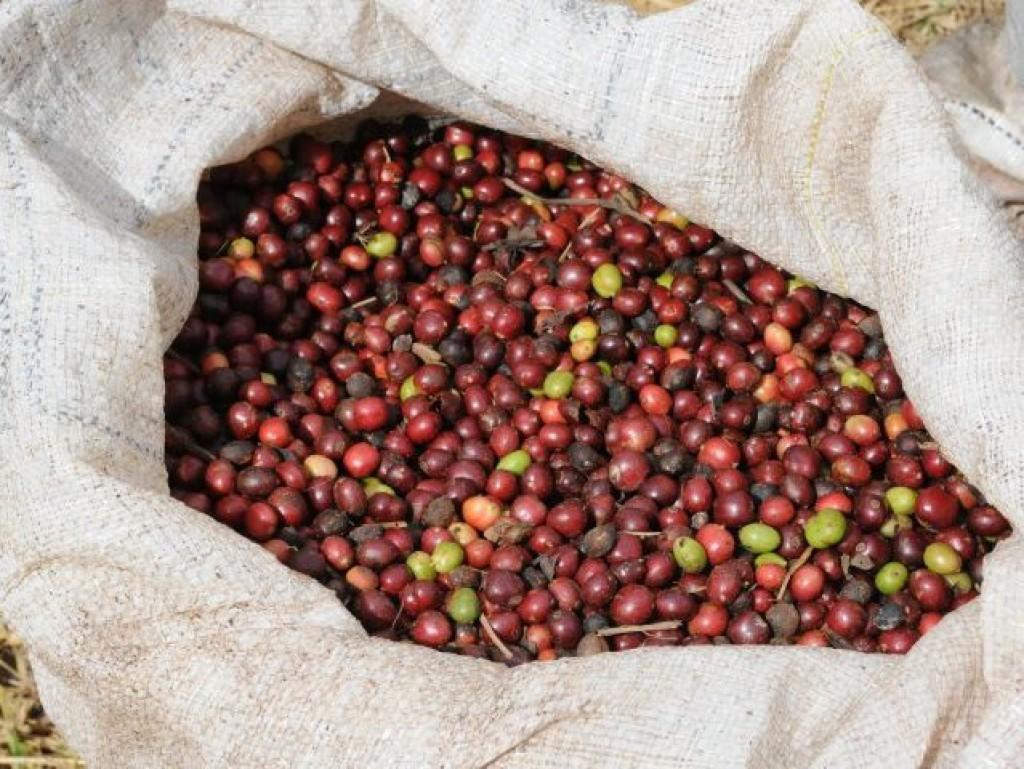 CAFÉ: Receio de menor oferta eleva com força preços em setembro