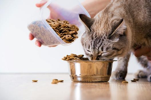 Rodzaje mięsa w karmach dla kota