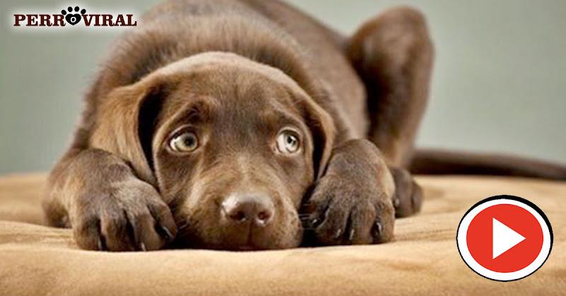 descubre aquí las 10 cosas que los perros más odian