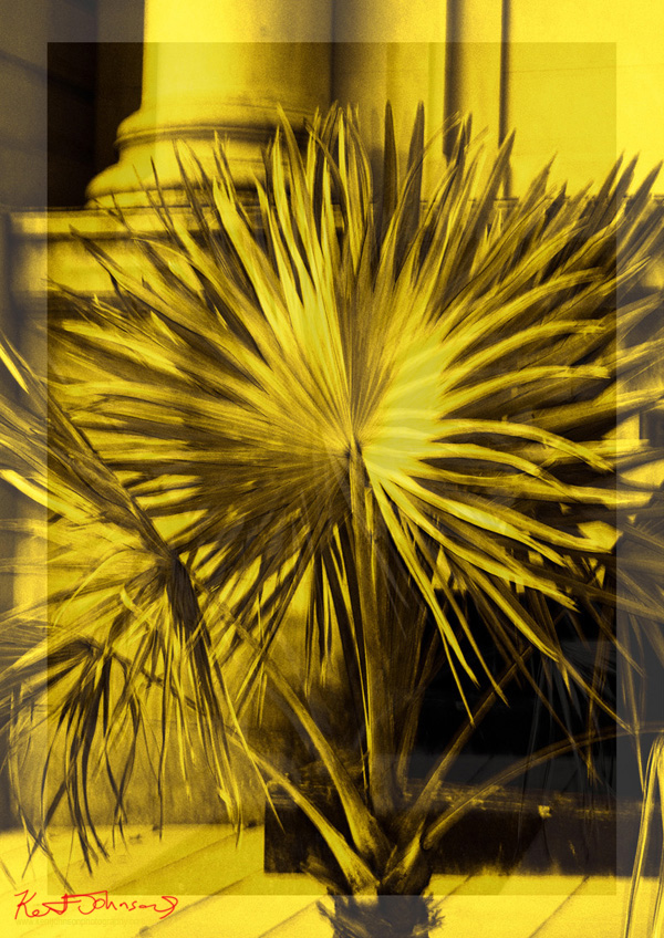 Traveller Palm, still life composition and photograph by Kent Johnson.