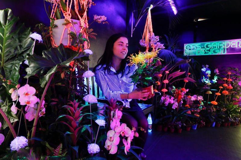 colores ultravioleta en orquídeas y otras plantas de interior colgantes