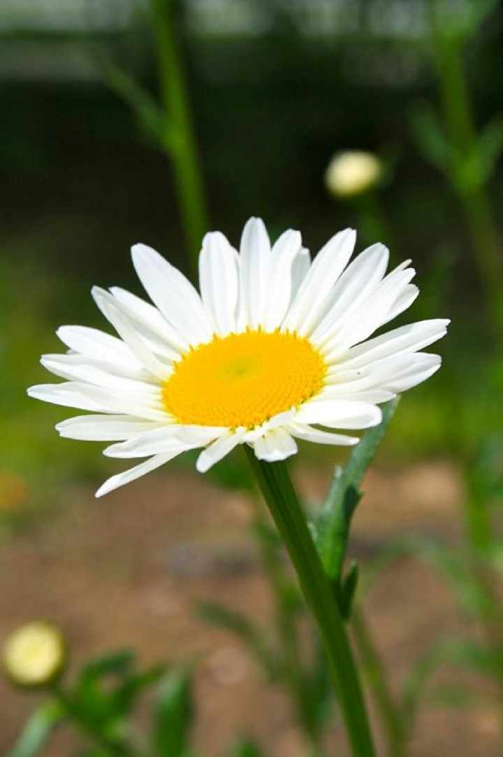 Hinh nen hoa cuc dep%2B%25286%2529