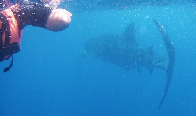 Yucatán submarino