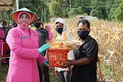 Ketua Bhayangkari Daerah Sulbar Bagikan Hasil Panen Raya Kebun Jagung